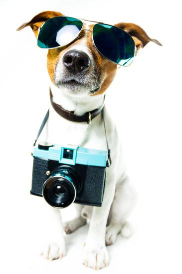 Comment Trouver Des Images Pour Son Blog